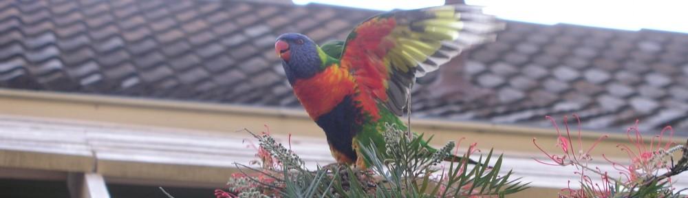 Downs Bird Breeders